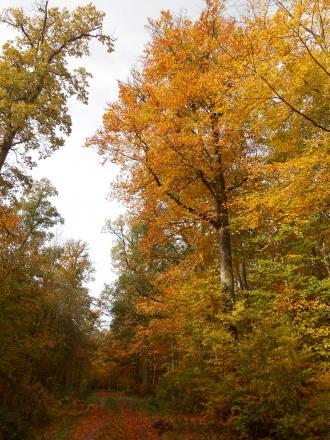 秋のシューンブーフ4