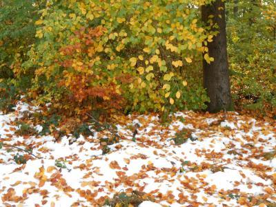 秋のシューンブーフ5