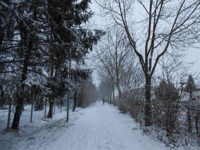 雪の帰り道3