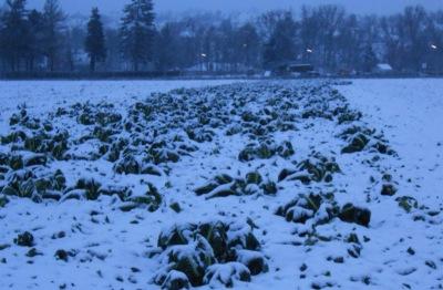 雪の帰り道7