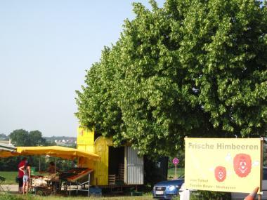 黄色スタンド1