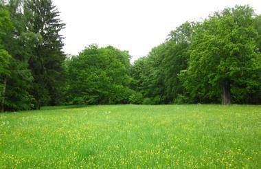 うり坊の森4