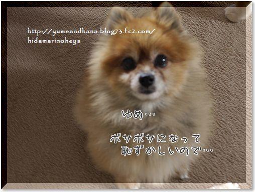 1-kLxeKysN48NolrN1414851269_1414851404.jpg