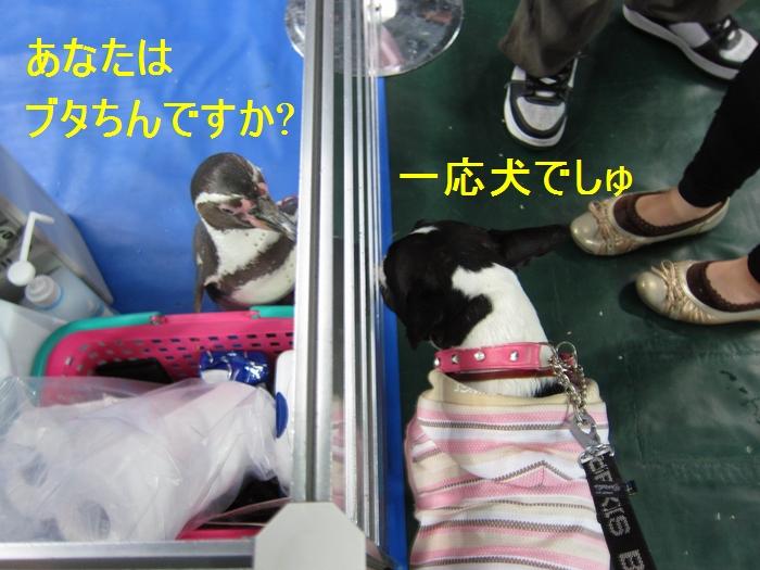 10_20120508210948.jpg