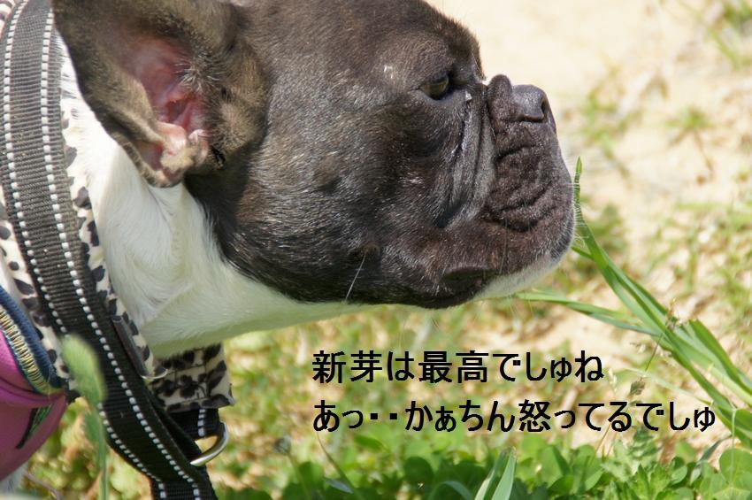 11_20120430234859.jpg