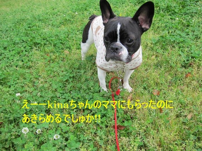 11_20120504193218.jpg
