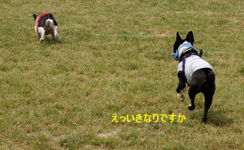 12_20120517172127.jpg