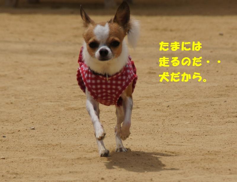 12_20120808175031.jpg