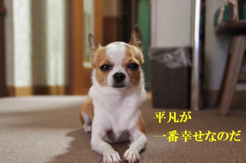 12_20120828161916.jpg
