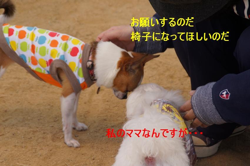 13_20120430234857.jpg