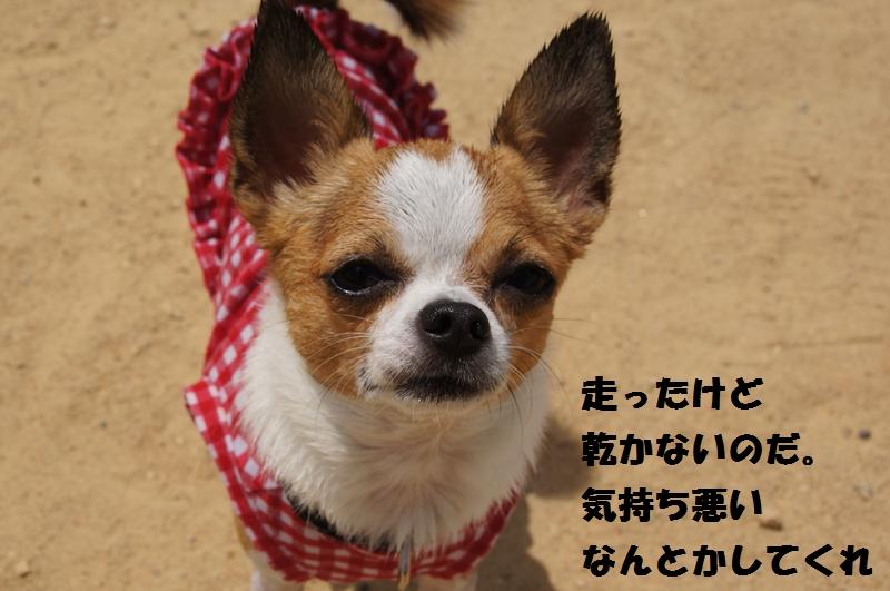 13_20120808175031.jpg