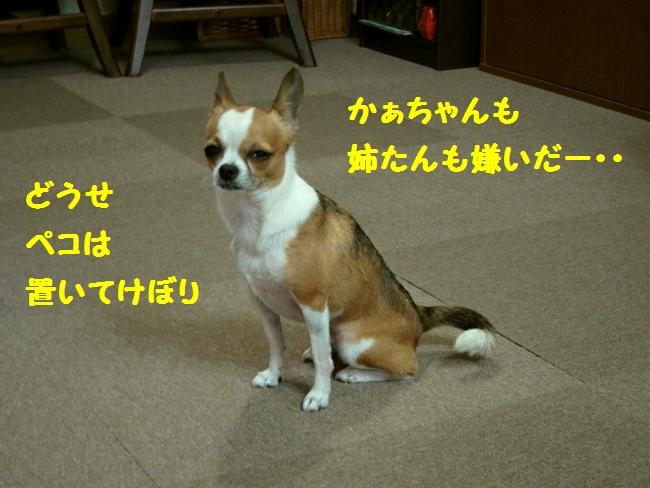 14_20120814225133.jpg