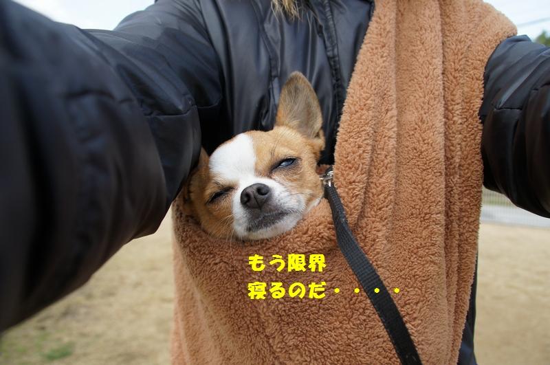 14_20121228103923.jpg
