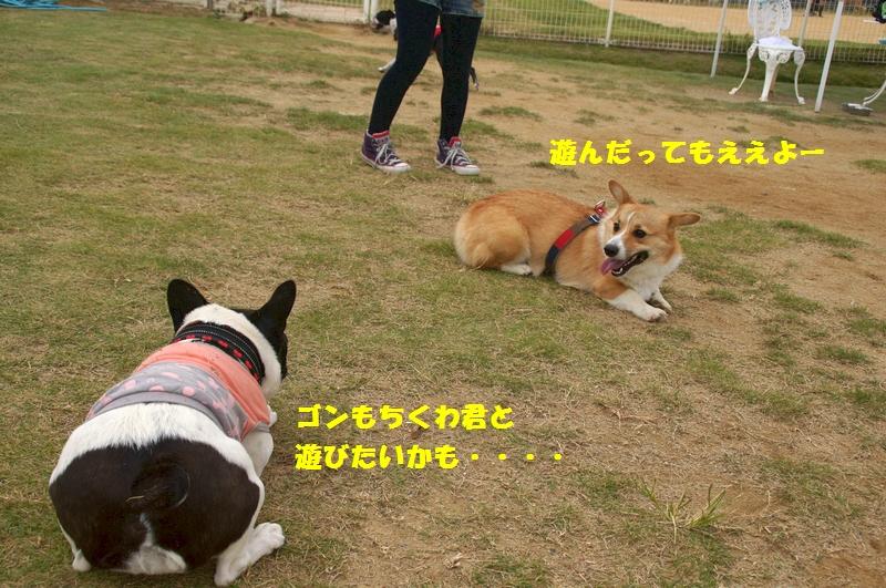 16_20121019085004.jpg