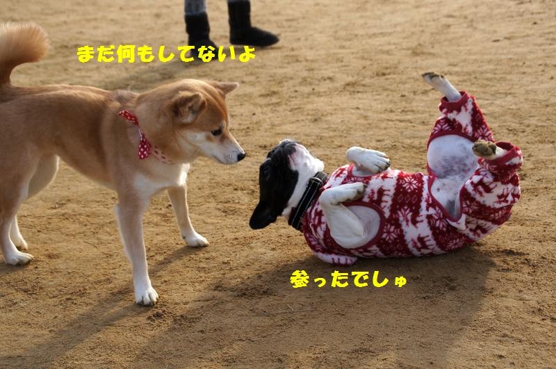 16_20121228103927.jpg