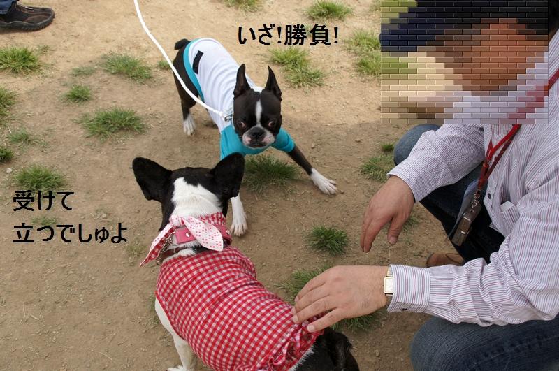 18_20120517173050.jpg