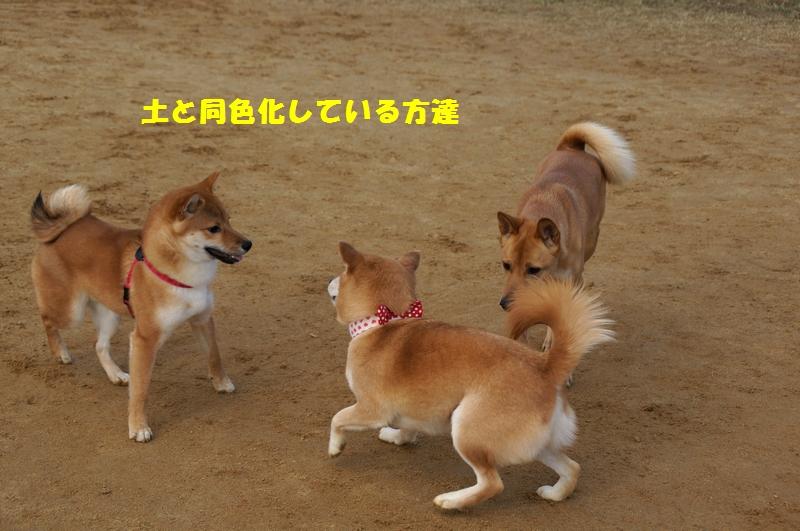 18_20121228103927.jpg