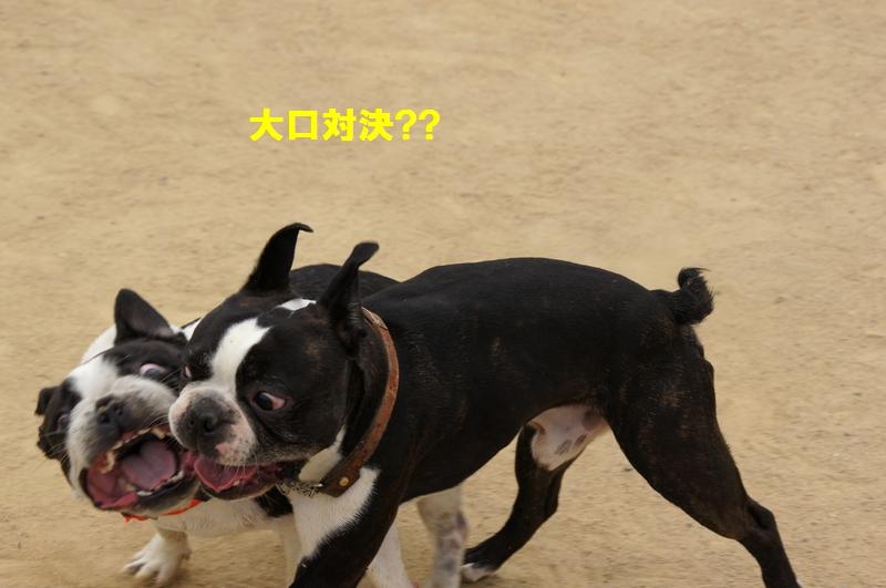 26_20120531135547.jpg