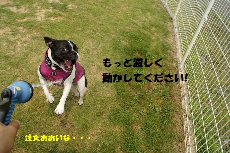 2_20120730125845.jpg