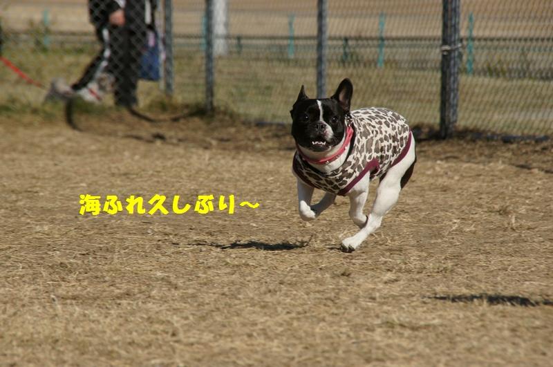 3_20121202230749.jpg