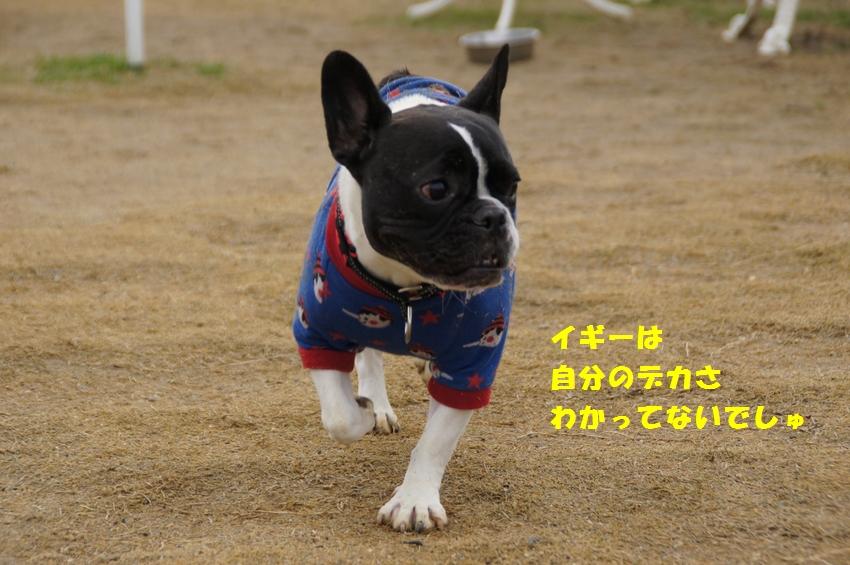 3_20121220102320.jpg