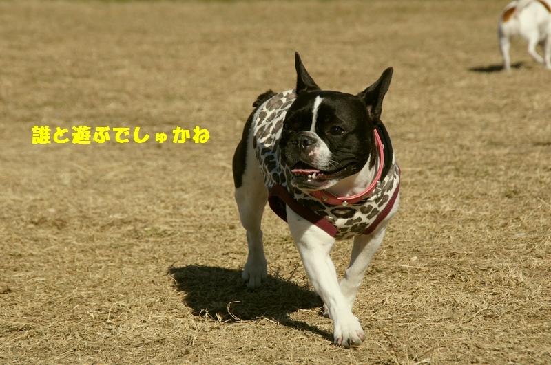 4_20121202230749.jpg