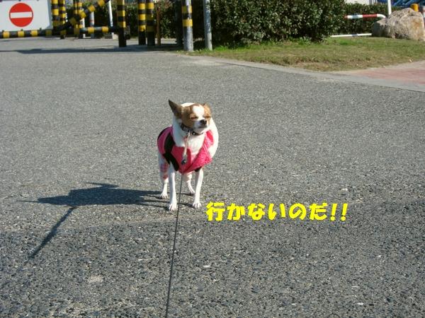 4_20121209213839.jpg