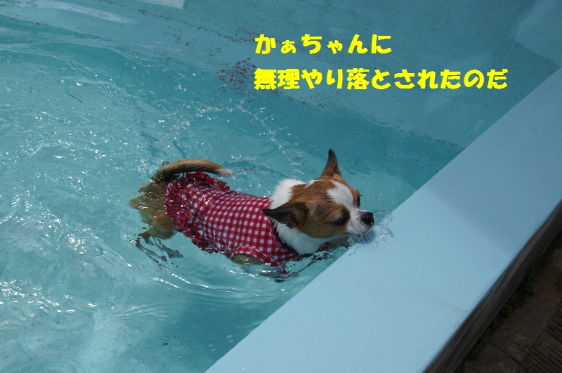 5_20120808174255.jpg