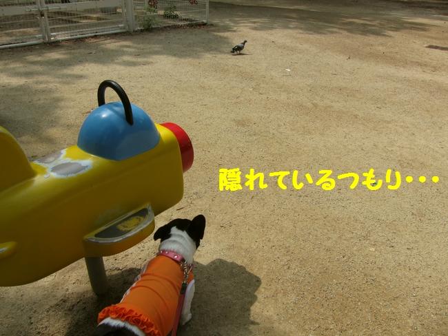 5_20120814223953.jpg