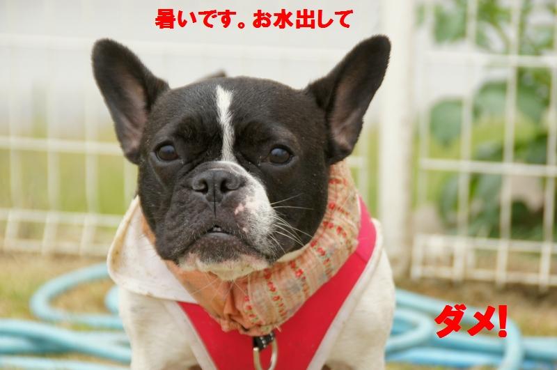 7_20120531134735.jpg