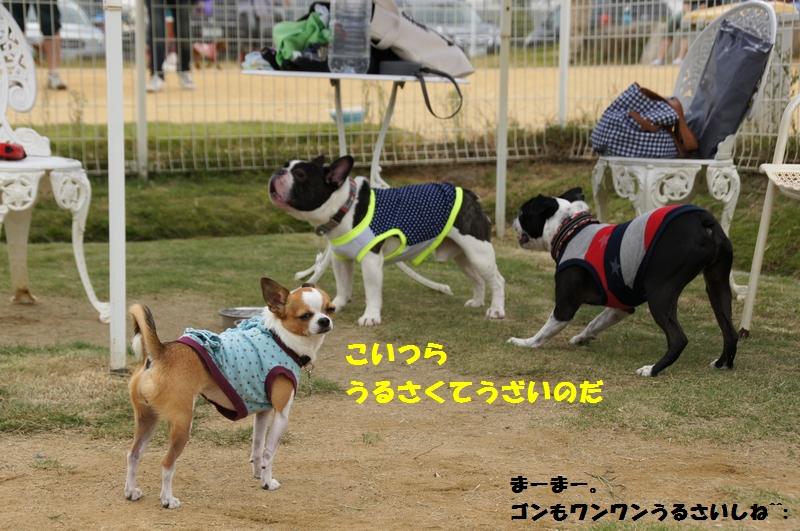 7_20121019084431.jpg