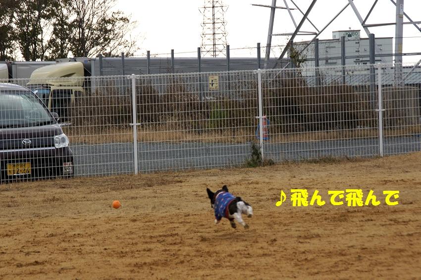 7_20121220102425.jpg