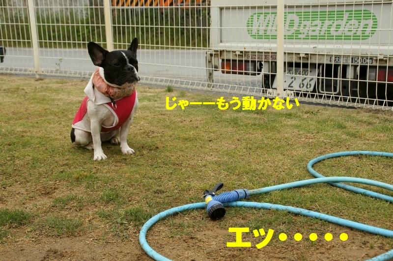 8_20120531134734.jpg