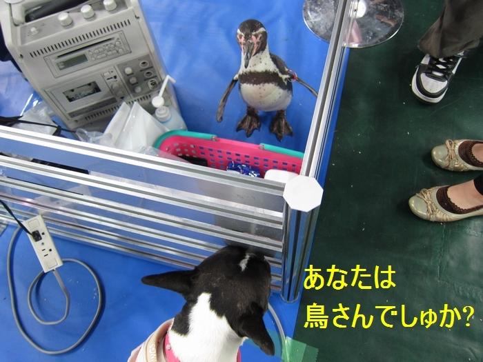 9_20120508210615.jpg