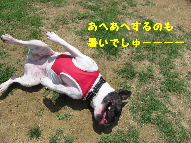 IMG_0069.jpg