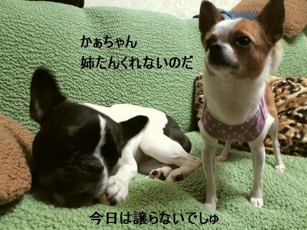 d_20120609151855.jpg