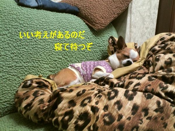 f_20120609151940.jpg