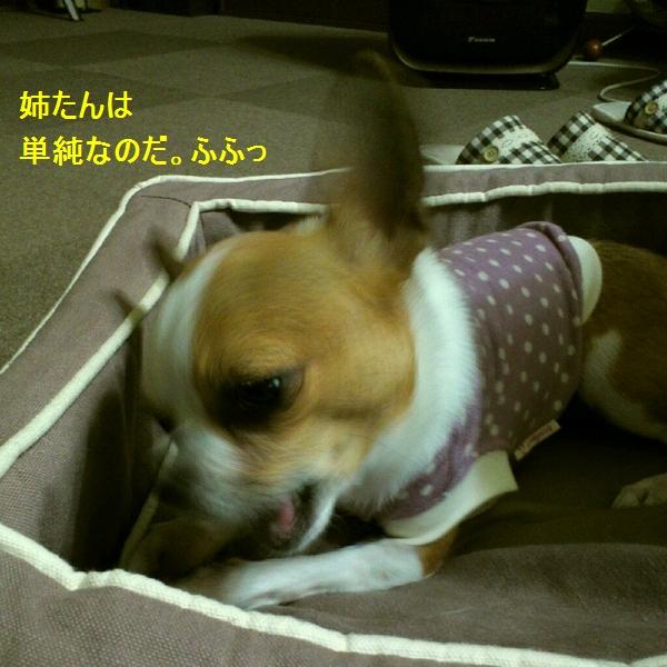 g_20120609151939.jpg