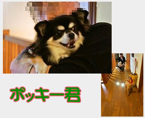 cats76-600わごんぼーい4