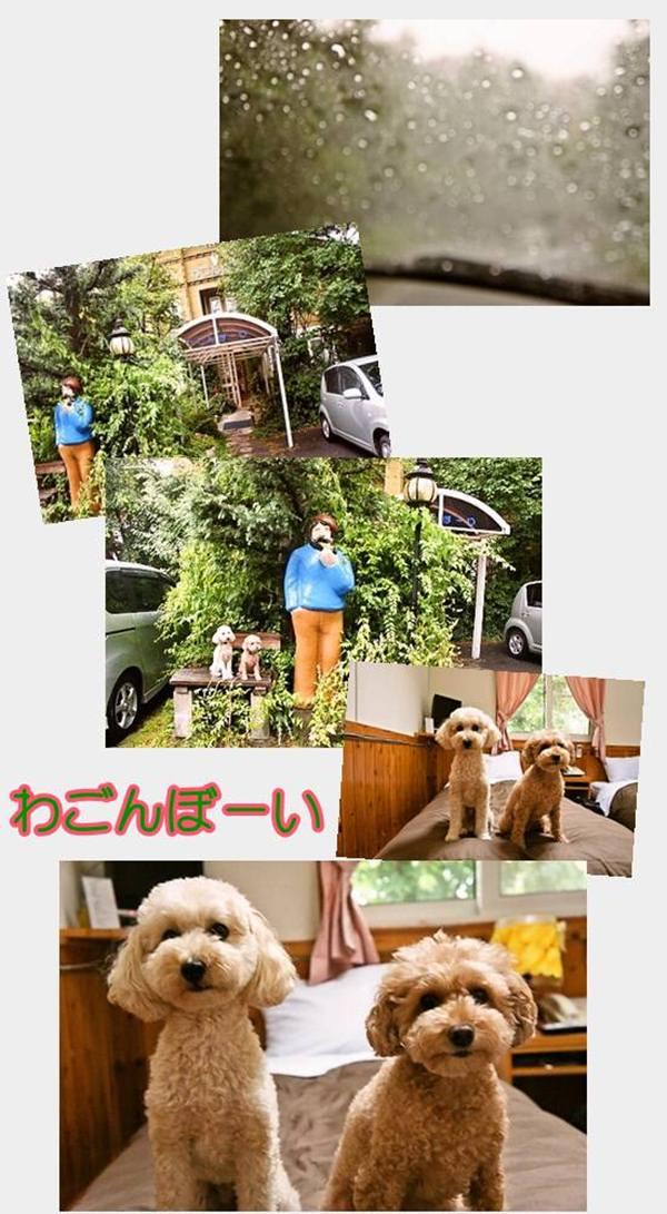 cats76-1000わごんぼーい1