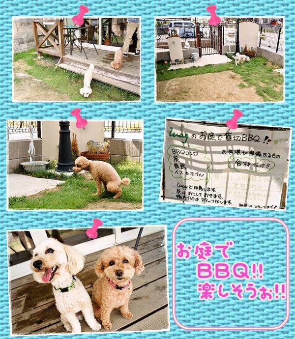 J4dog garden wag 2