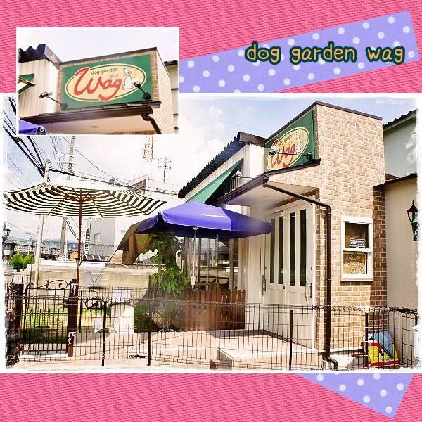 K5dog garden wag 1