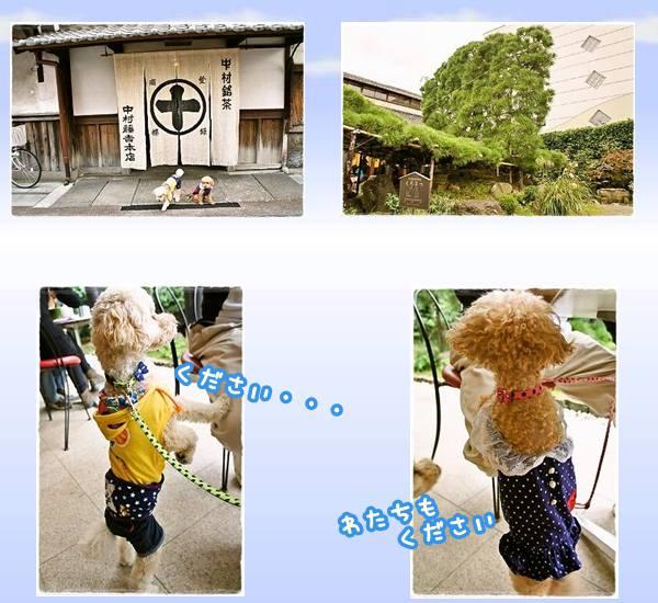 夢コスモス2012-6