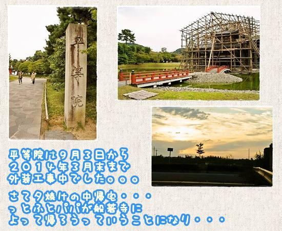 夢コスモス2012-7