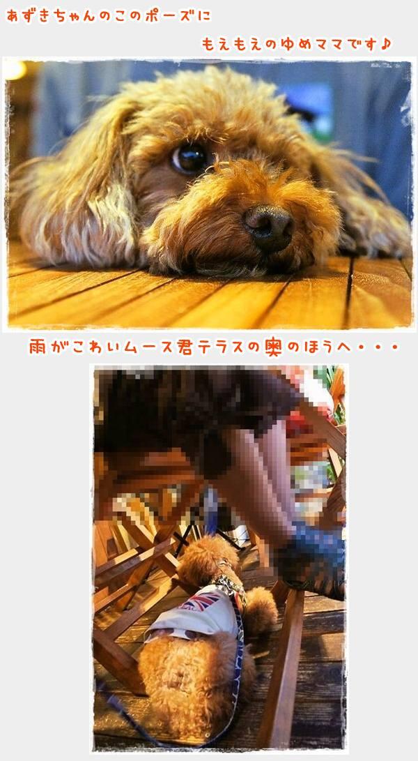 G831-3_20120914171749.jpg