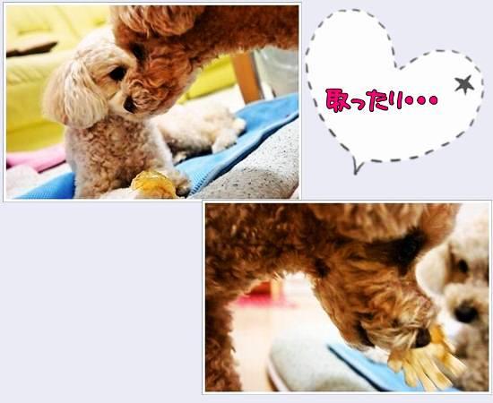 cats75kc-6.jpg