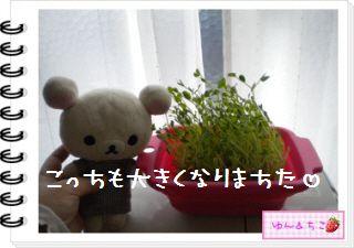 ちこちゃん日記★127★にょきっ♪-3