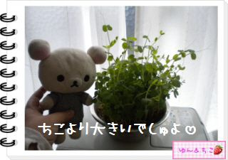 ちこちゃん日記★127★にょきっ♪-2