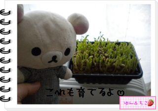 ちこちゃん日記★127★にょきっ♪-5