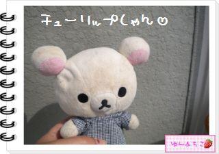 ちこちゃんの観察日記2012★18★チューリップの観察11-1